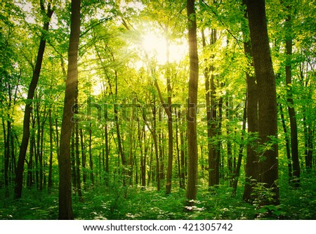 beautiful forest landscape in the morning - stock photo