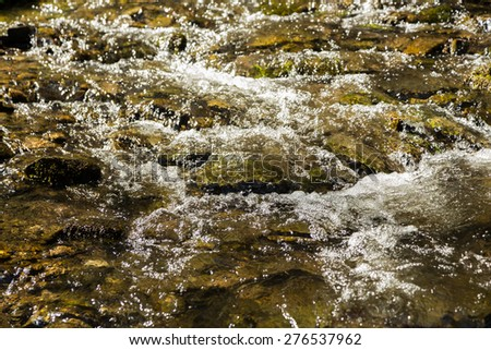 Beautiful forest landscape. Mountain forest. Forest mountain river. - stock photo