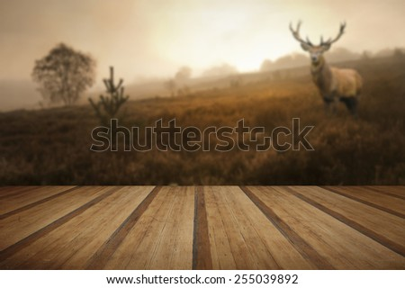 Beautiful forest landscape of foggy misty forest in Autumn Fall with beautiful red deer stag with wooden planks floor - stock photo