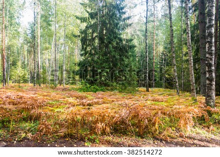 Beautiful forest landscape with an orange paportnike Sunny day.