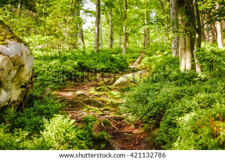 Beautiful forest mountain path - stock photo