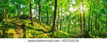 Beautiful forest panorama