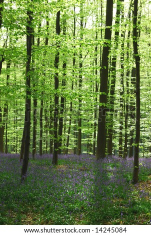 Beautiful forest with bright green leaves and purple flowers. - stock photo