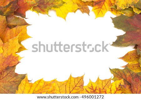 beautiful frame of bright yellow autumn maple leaves
