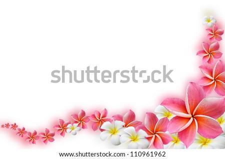 Beautiful Frangipani flowers  - border design - stock photo