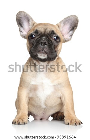 Beautiful French bulldog puppy. Portrait on a white background - stock photo