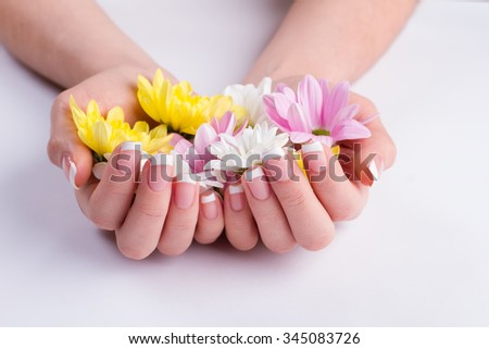 Beautiful french manicure with delicate flowers. Chrysanthemums in female hands. - stock photo