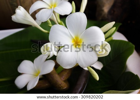 beautiful fresh charming white flower plumeria bunch floated on water with classic dark background of vintage and boutique style decoration for spa decor or picture gallery - stock photo