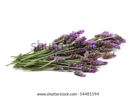 Beautiful fresh cut lavender over white background