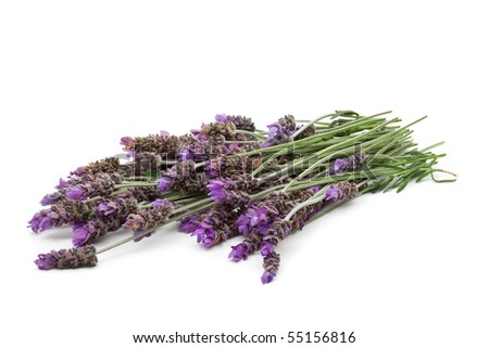 Beautiful fresh cut lavender over white background - stock photo