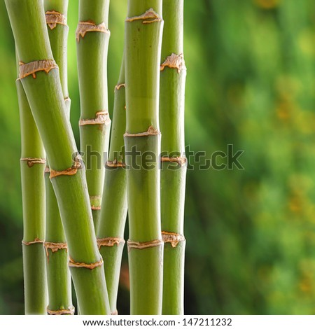 Beautiful fresh green bamboo background