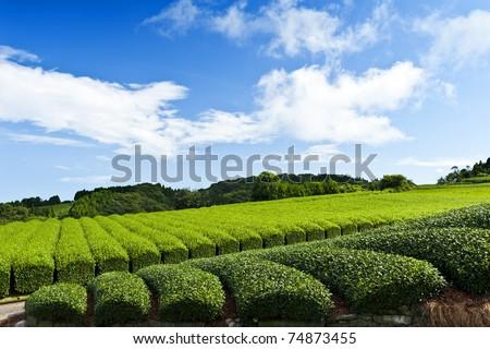 Beautiful fresh green tea plantation at Nihondaira, Shizuoka - Japan - stock photo