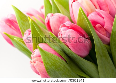 Beautiful fresh pink tulips in a vase on a white background