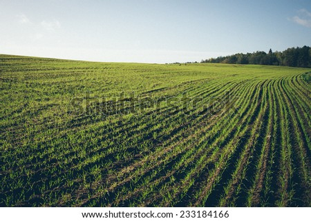 beautiful freshly cultivated green crop field in the countryside. Vintage photography effect. Retro grainy color film look.