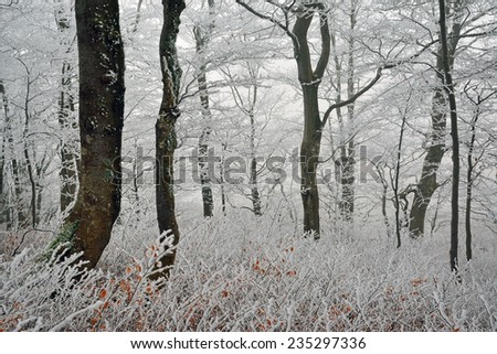 Beautiful frosted forest view - stock photo