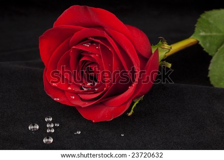 Beautiful full red rose laying across black velvet with water droplets spilled out in foreground - stock photo