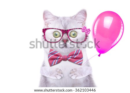 Beautiful funny british cat with glasses. Trendy cat in stylish dress. Funny animals - stock photo