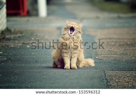 Beautiful funny cats in the streets - stock photo