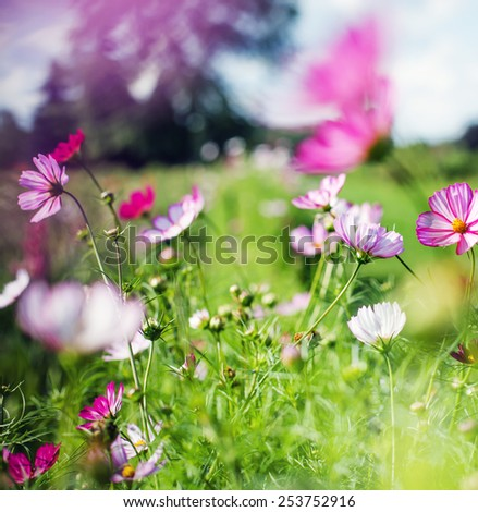beautiful garden flowers/ summer flower background - stock photo