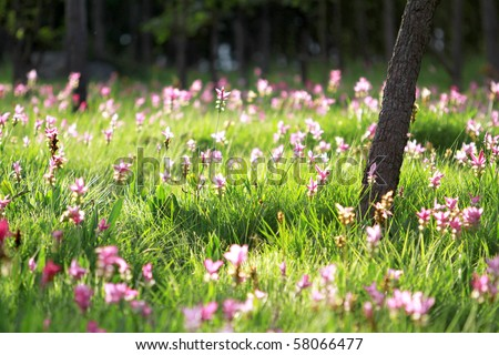Beautiful garden in Thailand nation park - stock photo