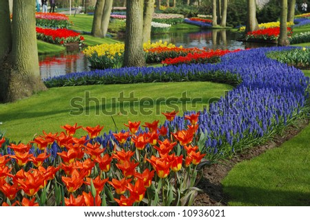 beautiful garden of colorful flowers in spring (keukenhof, The Netherlands) - stock photo
