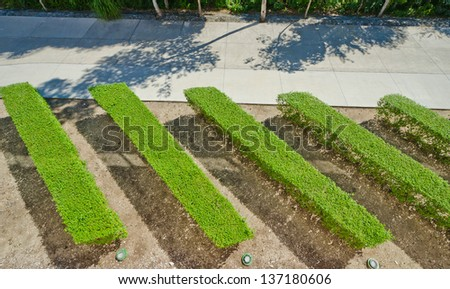 Beautiful garden with hedges. Manicured shrubs lines of the bushes. View from atop, above. - stock photo