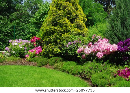 Beautiful garden with rhododendron  - fresh colors of spring - stock photo