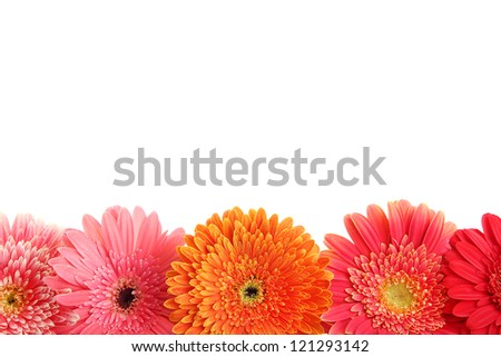 beautiful gerbera flowers isolated on white - stock photo