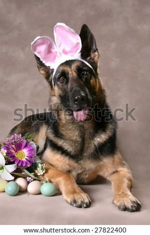 Beautiful German Shepard Dog with Flowers and Easter Eggs