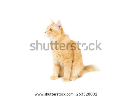 beautiful ginger cat on white background