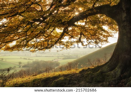 Beautiful golden Autumn tree lit by sunlight in landscape - stock photo
