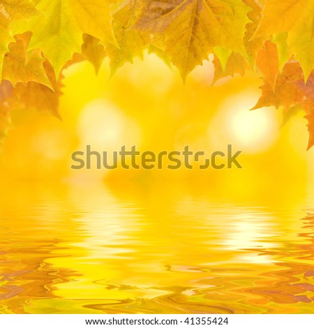 Beautiful golden leaves in autumn - stock photo