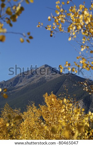 Beautiful golden trees with mountains and blue skies in the background. - stock photo