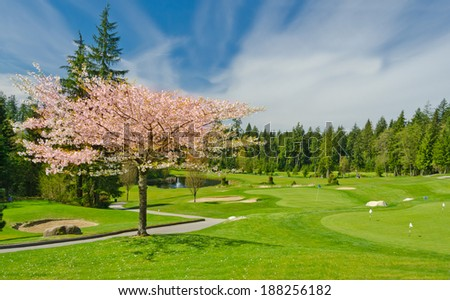Beautiful golf course at cherry blossom time in a sunny day with dark blue sky and clouds. Canada, Vancouver. - stock photo