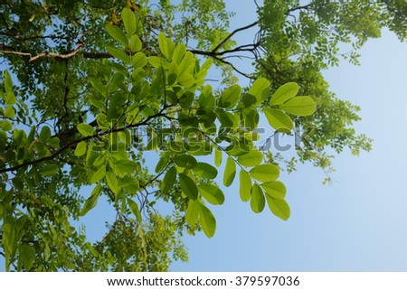 Beautiful gradient sky and green leaves