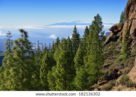 Beautiful Gran Canaria  landscape. Pine forest against the Tenerife island background. Canary island, Spain - stock photo
