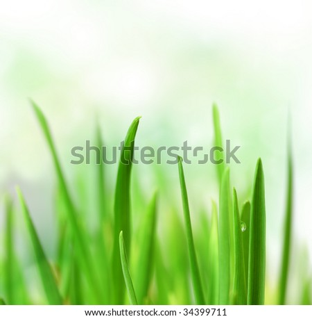Beautiful Grass - stock photo
