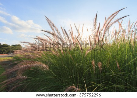 Beautiful grass flowers - stock photo
