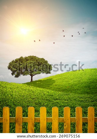 Beautiful grass hills with a tree and a wooden fence under sunny weather - stock photo