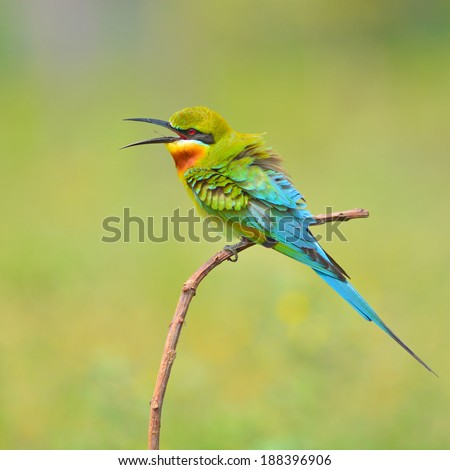 Bee-eater resting on a perch Stock Photos, Bee-eater resting on a