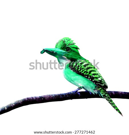 Beautiful green bird perching on branch isolated on white background - stock photo