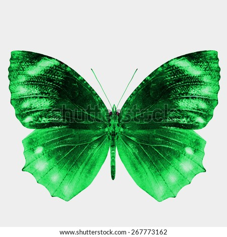 Beautiful Green Buterfly isolated on white background - stock photo