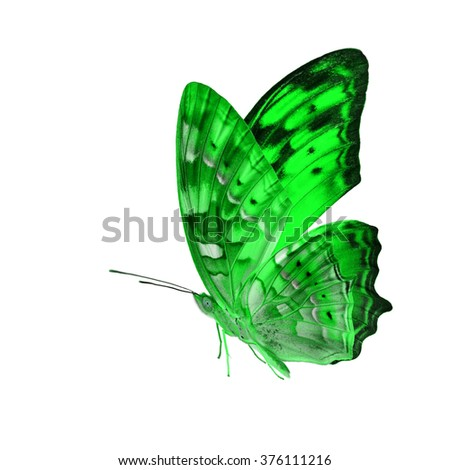 Beautiful Green butterfly lower wing profile flying up isolated on white background