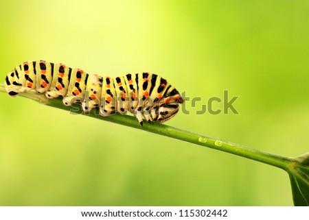 Beautiful green caterpillar creeps on a green grass - stock photo