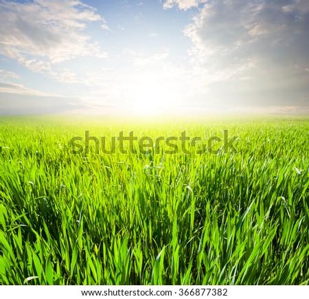 beautiful green field at the sunrise - stock photo