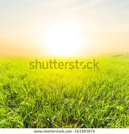 beautiful green fields at the early morning