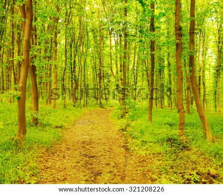 beautiful green forest - stock photo