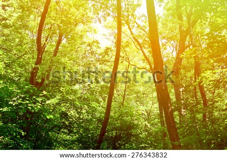 Beautiful green forest background - stock photo