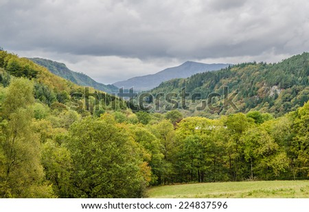 Beautiful green forest growing in the valleys of Snowdonia - stock photo