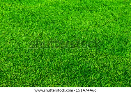 Beautiful green grass for background - stock photo